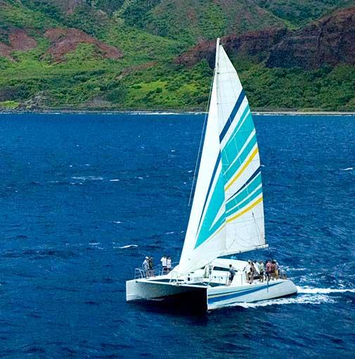 Holo Holo Tour Boat Graphics